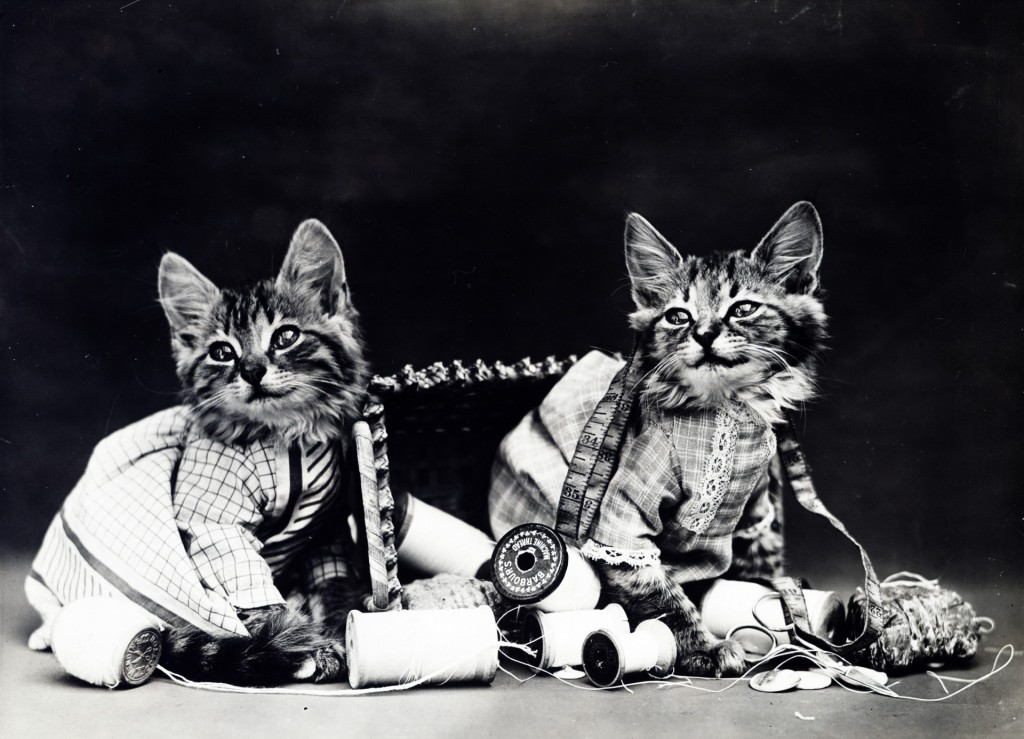 Naughty Kittens Playing With Yarns