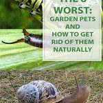 Gardening Tips The 6 Worst Garden Pets Aphids