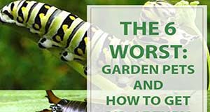 Gardening Tips The 6 Worst Garden Pets Aphids