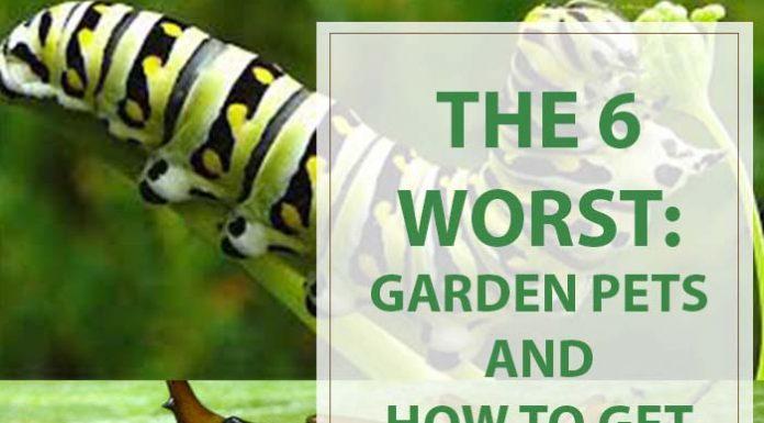 Gardening Tips The 6 Worst Garden Pets