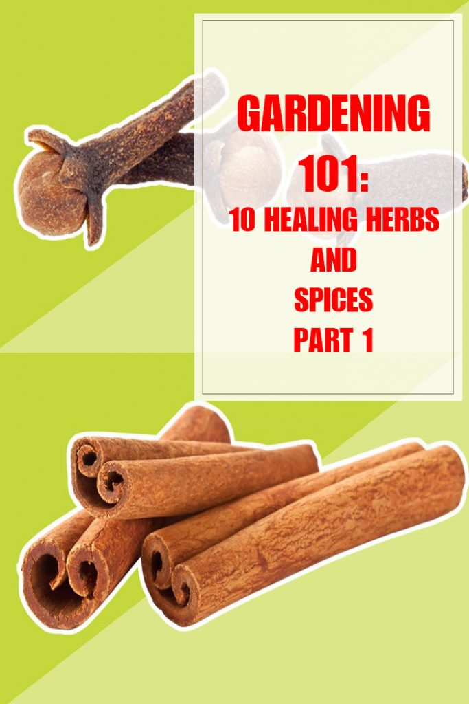10 Healing Herbs and Spices Part 1
