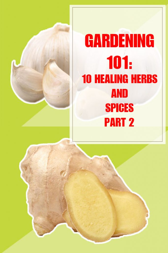 10 Healing Herbs and Spices Part 2