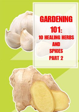 10 Healing Herbs and Spices Part 2 thump