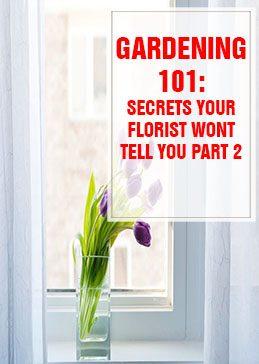 26 Secrets Your Florist Won't Tell You Part 2 THUMP