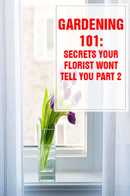 26 Secrets Your Florist Won't Tell You Part 2 THUMP