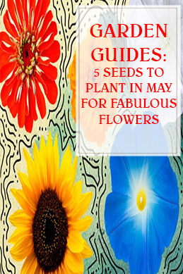 5 Seeds to Plant in May for Fabulous Flowers thump