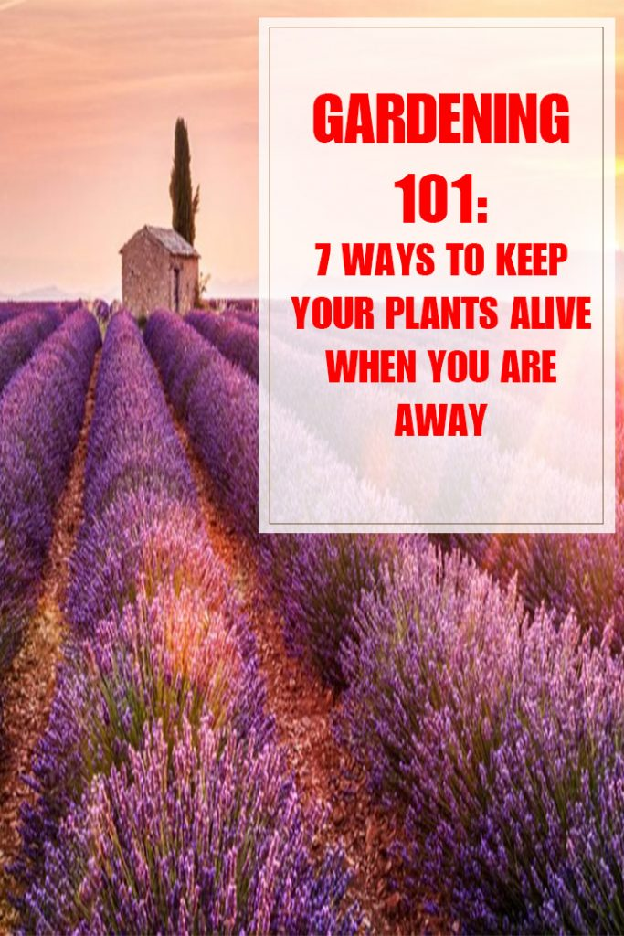 7 Ways to Keep Your Plants Alive When You're Away