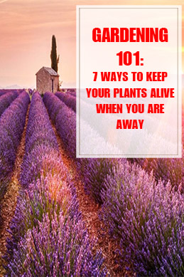 7 Ways to Keep Your Plants Alive When You're Away THUMP