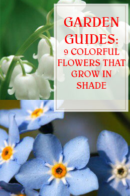 9 Colorful Flowers That Grow in Shade THUMP