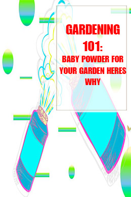 Baby Powder For Your Garden Heres Why THUMP