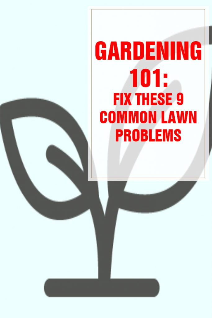 Fix These 9 Common Lawn Problems