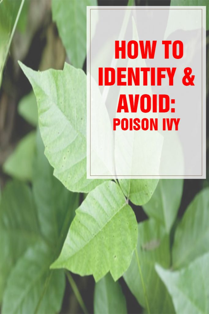How to Identify and Avoid Poison Ivy