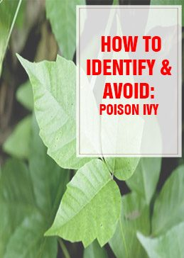 How to Identify and Avoid Poison Ivy - thumps