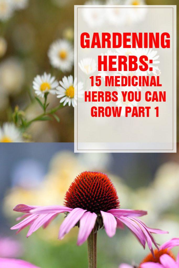 Medicinal Herbs You Can Grow Part 1