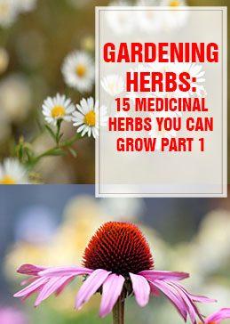 Medicinal Herbs You Can Grow Part 1 THUMP