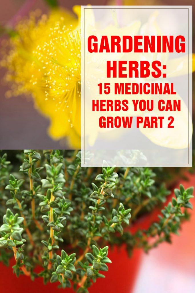 Medicinal Herbs You Can Grow Part 2