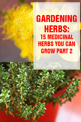 Medicinal Herbs You Can Grow Part 2 THUMP
