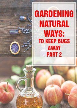 Natural Ways to Keep Bugs Away THUMP part 2
