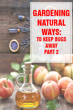 Natural Ways to Keep Bugs Away THUMP part 2
