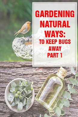 Natural Ways to Keep Bugs Away part 1