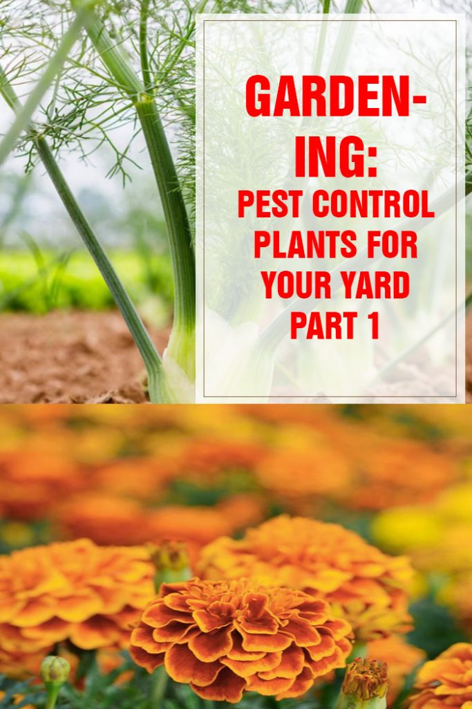 Pest Control Plants For Your Yard Part 1