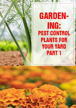 Pest Control Plants For Your Yard Part 1 THUMP
