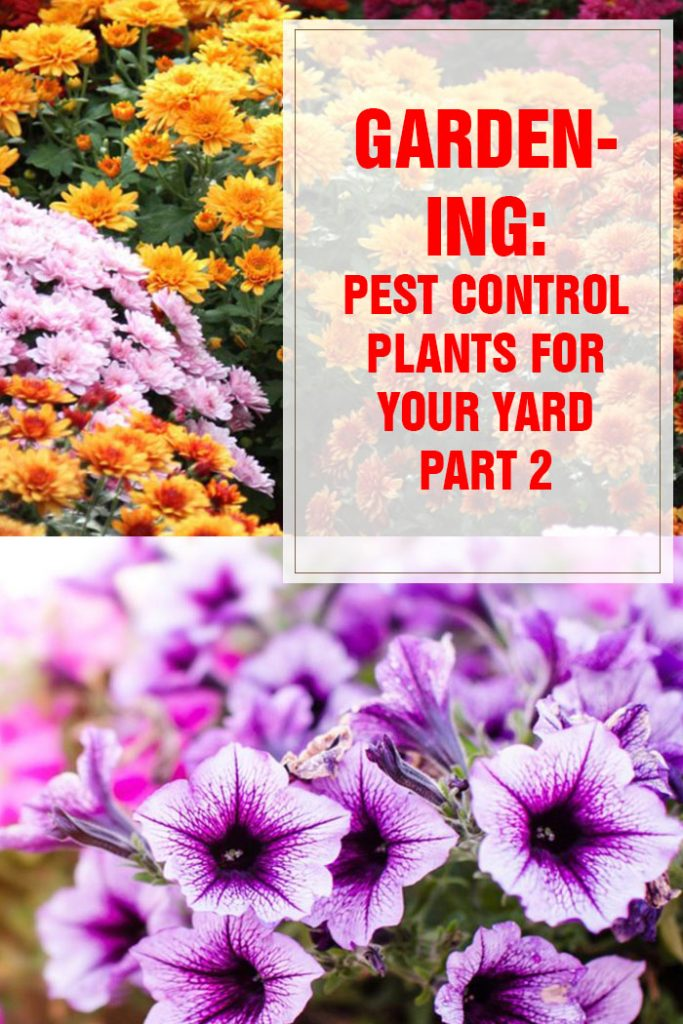 Pest Control Plants For Your Yard Part 2
