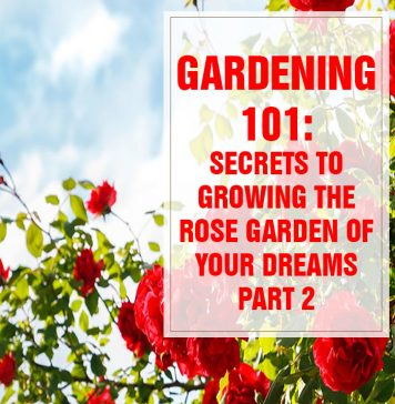 Secrets to Growing the Rose Garden of Your Dreams PART 2