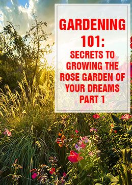 Secrets to Growing the Rose Garden of Your Dreams Part 1