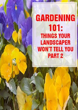 Things Your Landscaper Won't Tell You Part 2 THUMP