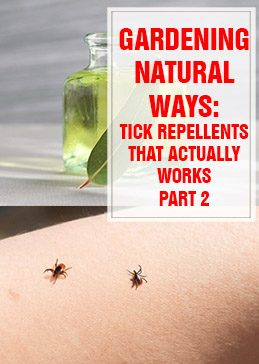 Tick Repellents That Actually Work Part 2 thumps