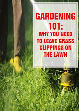 Why You Need to Leave Grass Clippings on the Lawn THUMPS