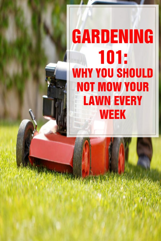 Why You Shouldn't Mow Your Lawn Every Week