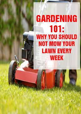 Why You Shouldn't Mow Your Lawn Every Week THUMP