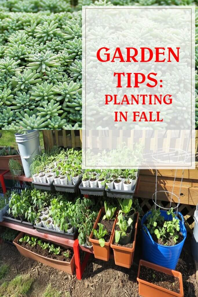Planting In The Fall
