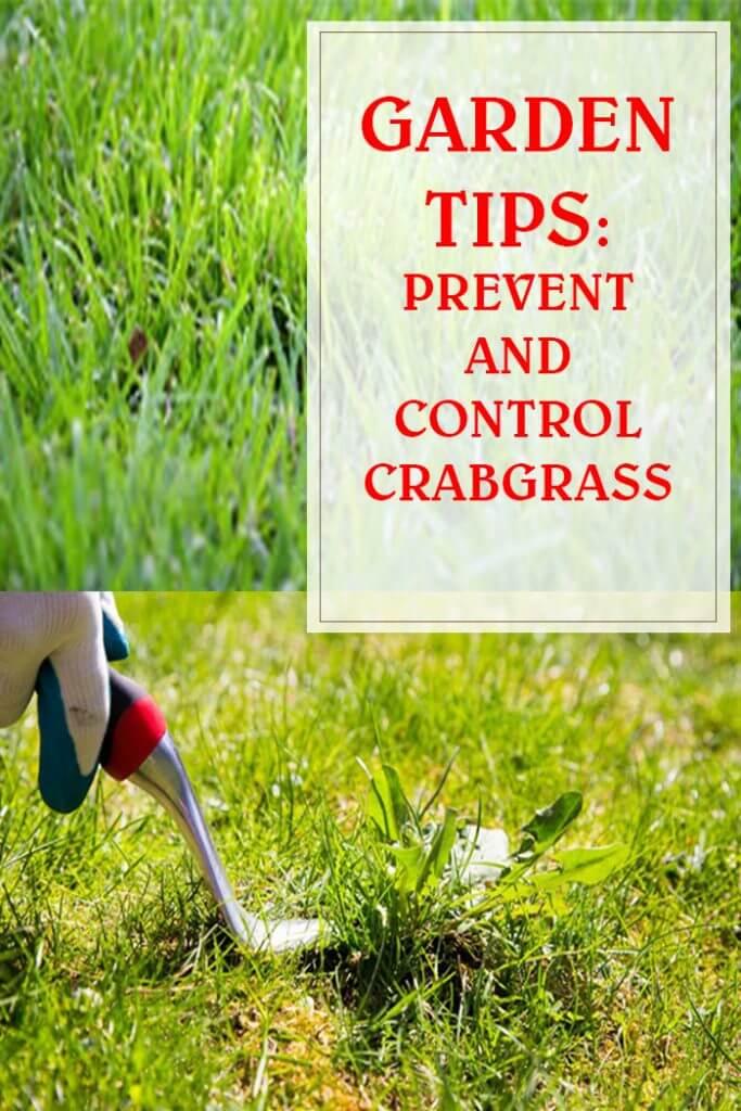 Prevent And Control Crabgrass