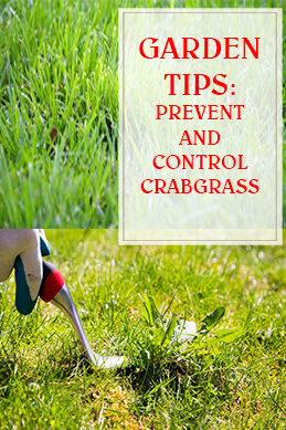 Prevent And Control Crabgrass THUMP
