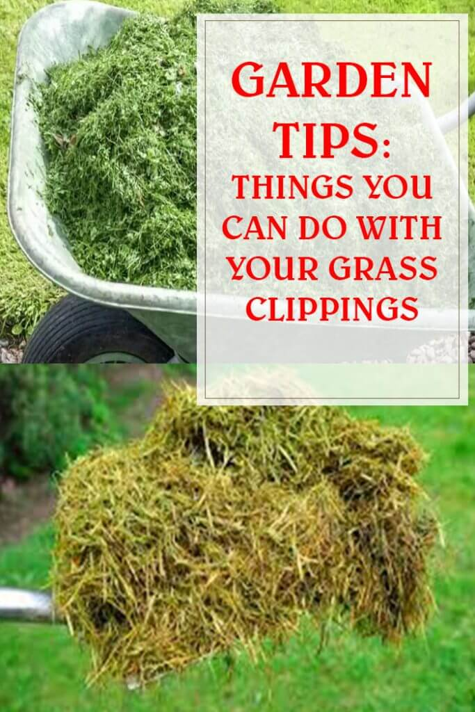 Things You Can Do With Your Grass Clippings