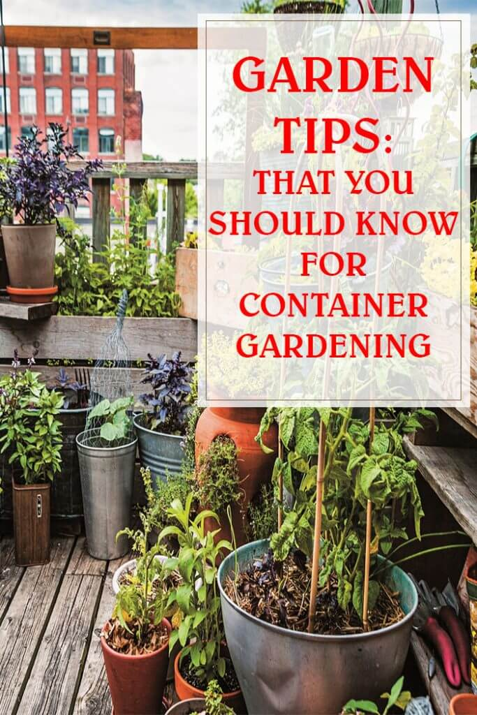 Tips That You Should Know For Container Gardening