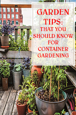 Tips That You Should Know For Container Gardening THUMP