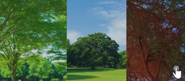 Gardening Tips For Trees