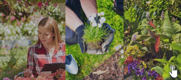 Gardening Tips For Flowers