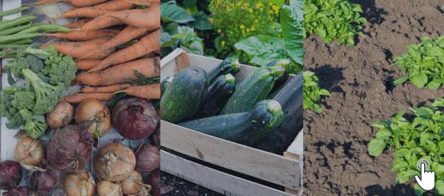 Gardenin Tips For Vegetables